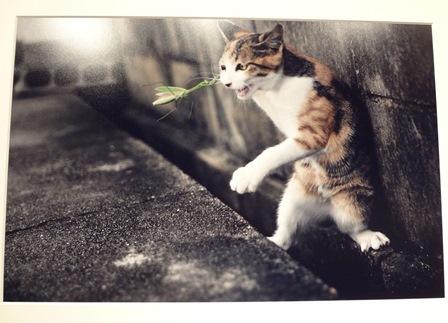 平元盛親写真展no.03_フォトギャラリー「シリウス」