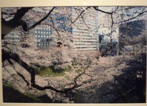 写遊東京自然写真塾写真展 「人と自然への愛 第10回展」no.03~_フォトギャラリー「シリウス」